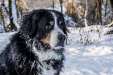 Jak dbać o psa w okresie zimowym?